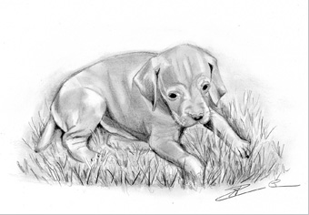Dessin-img-chiot