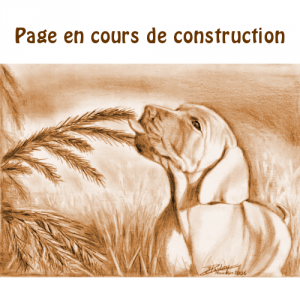 page_construction_C3T
